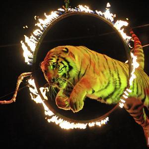 Цирки Боровска